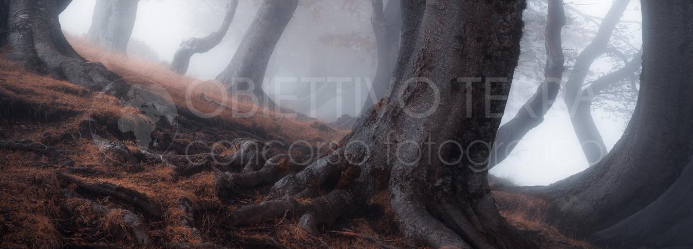 MENZIONE ALBERI E FORESTE
